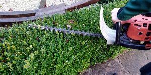 Gartenbau- Pflege